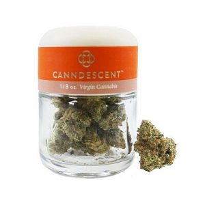 Weed Way - Canndescent Connect