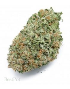 Weed Way Sunland Tujunga - Sativa Cannabis