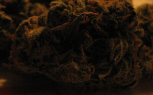 Sour Diesel for Nausea at WeedWay, Sunland